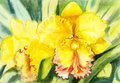 Painting Yellow,orange Color Of Orchid Flower And Green Leaves Stock Images - 74434044