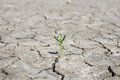 Photo New Life Plant Dry Areas, Concept And Ideas About Drought Stock Image - 74498651