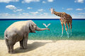 Elephant, Seagull And Giraffe At The Beach Royalty Free Stock Photography - 74569927