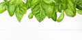 Frame Of Basil Leafs Royalty Free Stock Image - 74570786