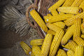 Wheat Ears And Corn Cobs In Basket Royalty Free Stock Photo - 74585385