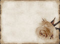 Old Paper And Rose Royalty Free Stock Photography - 74592577