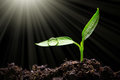 Seedling Stock Photo - 74606980