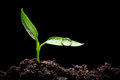 Seedling Stock Images - 74607794
