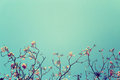 Leafless Tree Branch With Pink Flowers Against Blue Sky Background, Vintage Toned Image Stock Photography - 74653832