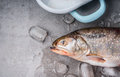 Raw Whole Trout  Head With Ice Cubes  On Concrete Stone Background, Top View, Place For Text. Stock Photography - 74684922