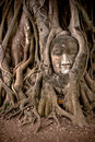 Buddha S Head In Banyan Tree Roots Stock Images - 7472264