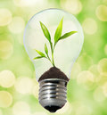 Environment Friendly Bulb Royalty Free Stock Photography - 7473437