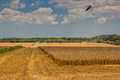 Harvest Wheat Field Stock Images - 74737274