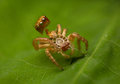 Spider Molt Stock Photography - 74859702
