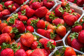 Strawberries In Boxes - Strawberry Fruits In Box Royalty Free Stock Images - 74891299