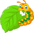 Cartoon Caterpillar Eating Leaf Royalty Free Stock Photo - 74891505