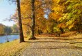 The Alley In The Shade Of The Autumn Trees Stock Image - 74931321