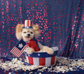 American Patriotic Small Dog Sits In Stars And Stripes Bucket Stock Photo - 74942510