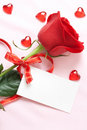 Red Rose Royalty Free Stock Photo - 7501735