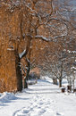 Way In Winter Royalty Free Stock Images - 7505679