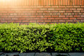 Wall Brick And Green Bush Over The Ground Concrete In The Park With The Hard Sunlight. Royalty Free Stock Photo - 75000065