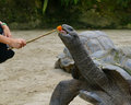 Children Playing With Turtle At The Zoo Royalty Free Stock Photos - 75015958