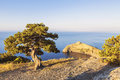 Alone Pine Tree Growing On The Slope Of The Mountain In The Crimea Royalty Free Stock Photos - 75097888