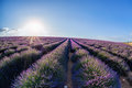 Lavender Field Against Blue Sky In Provence, France Royalty Free Stock Photos - 75099058