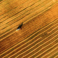 Harvester Working In Field And Mows Wheat. Ukraine. Aerial View. Royalty Free Stock Photography - 75121897