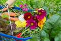 Harvest From The Vegetal Garden Royalty Free Stock Images - 75167319