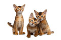 Three Cute Abyssinian Kitten Sitting On Isolated White Background Stock Photography - 75179052