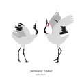 Two Japanese Cranes Dancing On A White Background Stock Images - 75210404