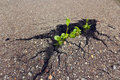 Green Sprout Growing Through The Asphalt. Ecology Concept. Stock Photo - 75234440