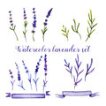 Set Of Watercolor Lavender And Ribbons Royalty Free Stock Photos - 75279518