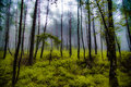 Misty Forest Royalty Free Stock Images - 75340539