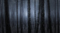 Dark Foggy Forest Royalty Free Stock Images - 75401389