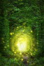 Fantastic Trees Scene - Tunnel Of Love With Fairy Light Royalty Free Stock Photography - 75402347