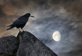 Raven On A Stone Royalty Free Stock Images - 75404119