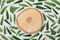Fern Leaves And Cross Section Of Birch Trunk On Gray Background Top View. Flat Lay Styling. Stock Images - 75413394