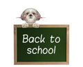 Dog Pupil With Pencil Back To School Royalty Free Stock Images - 75476009