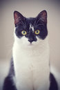 Portrait Of A Black-and-white Cat. Royalty Free Stock Photos - 75487218