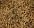 Thorny Background Royalty Free Stock Images - 7557029