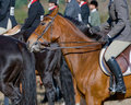 Horse And Rider Stock Image - 7558791