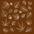 Autumnal Fallen Leaves And Acorns Chalk Sketches Stock Photos - 75514343