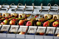 Clean And Fresh Apples On Conveyor Belt Stock Images - 75516914