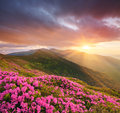 Mountain Landscape With Pink Flowers At Sunset Stock Images - 75541534