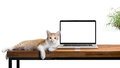 Cat Sitting With Blank Laptop On Wooden Table On White Royalty Free Stock Photography - 75543227