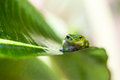 Green Frog Stock Photo - 75603990