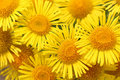 Bouquet Of Yellow Daisies Royalty Free Stock Photography - 75606577