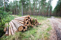 A Big Pile Of Wood In A Forest Road Stock Image - 75625701