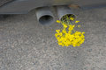 Car Pipe Exhaust, With Yellow Rape Stock Image - 75629251
