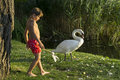 King Of Swans Stock Photos - 75632123