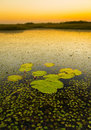 Lily Pads Royalty Free Stock Photography - 75685987