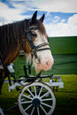 Clydesdale Horse Stock Image - 7575571
